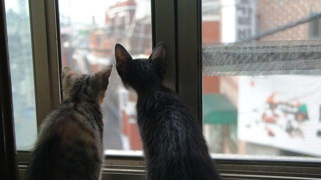 deux chats regardant par la fenêtre