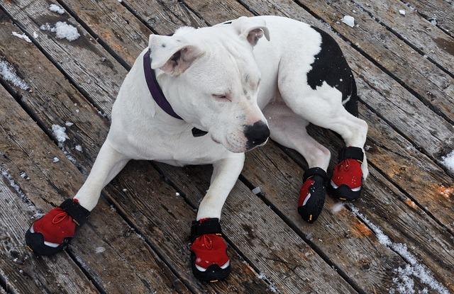 un chien avec des bottes