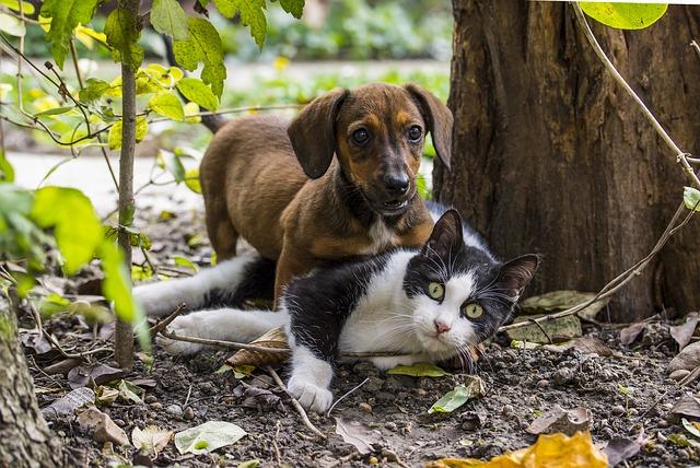 chien et chat qui jouent dans la forêt
