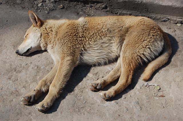 un chien qui dort