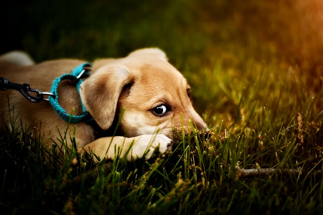 Un chien qui mange de l'herbe