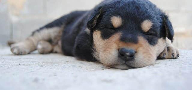 un chien qui dort sur un lit