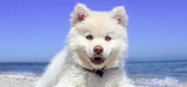 un chien avec l'oeil joueur