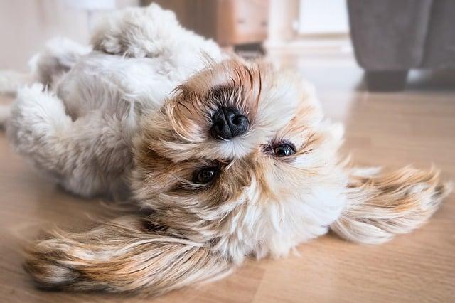 chien heureux qui joue