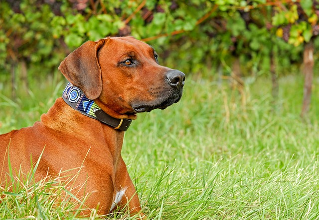 un chien qui regarde au loin