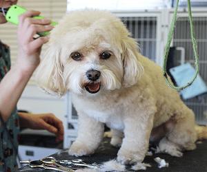 entretien du chien