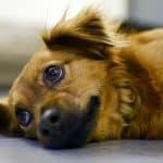 Le guide ultime du langage corporel canin (Vous disiez quoi ?)