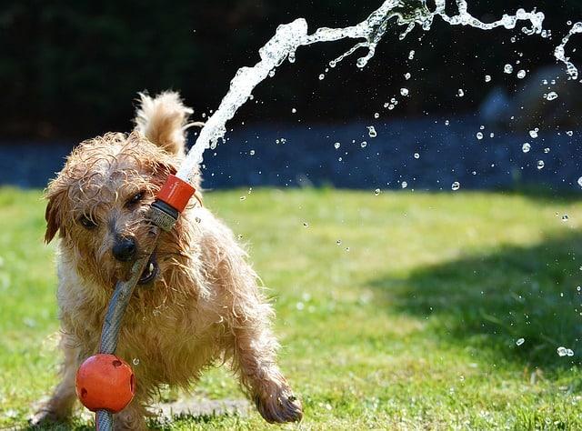 un chien faisant des betises