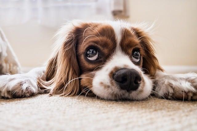 un chien qui déprime