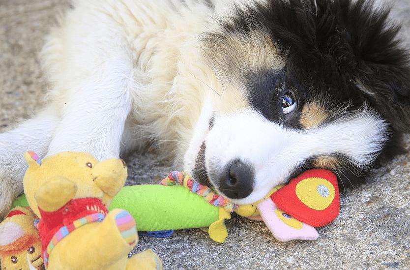 un chien qui joue