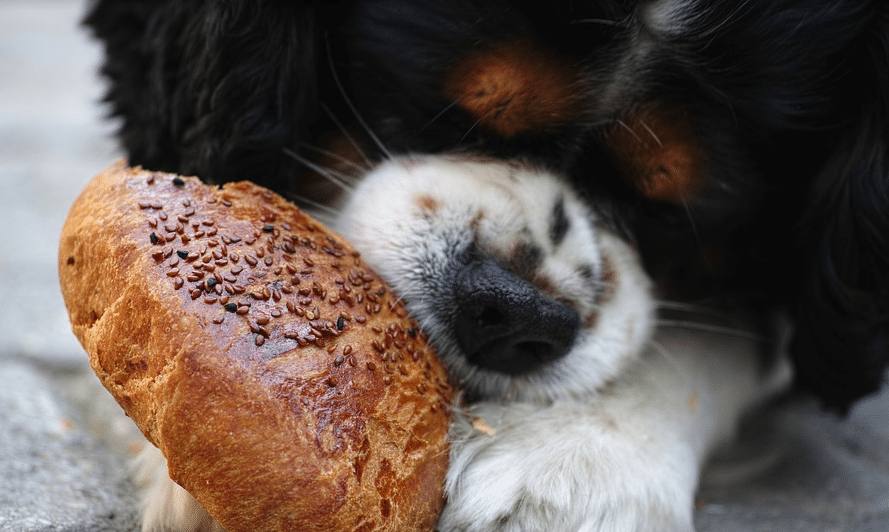 jeune cavalier qui mange du pain