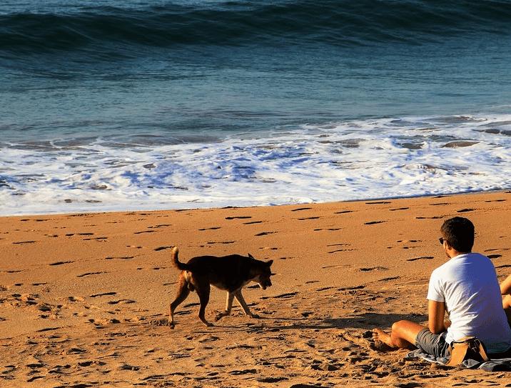 un chien a soif sur la plage