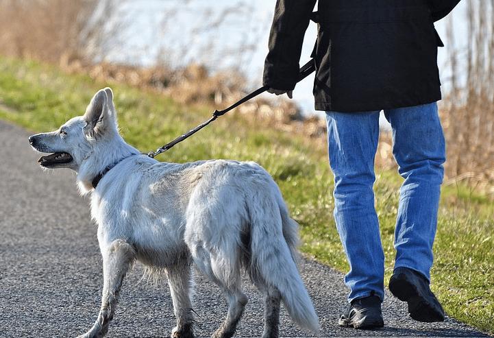 un maître qui se promene avec son chien