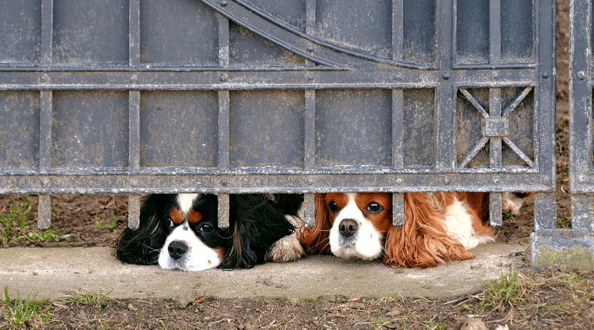 deux chiens tristes de voir partir leur maître