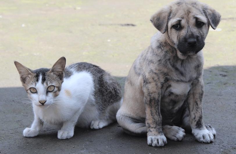 un chiot avec un chat