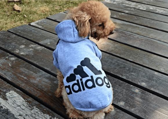 un chien avec manteau adidog