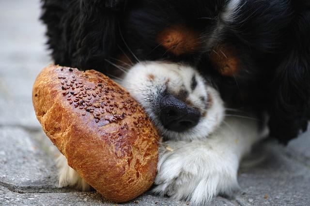 un chien qui mange du pain