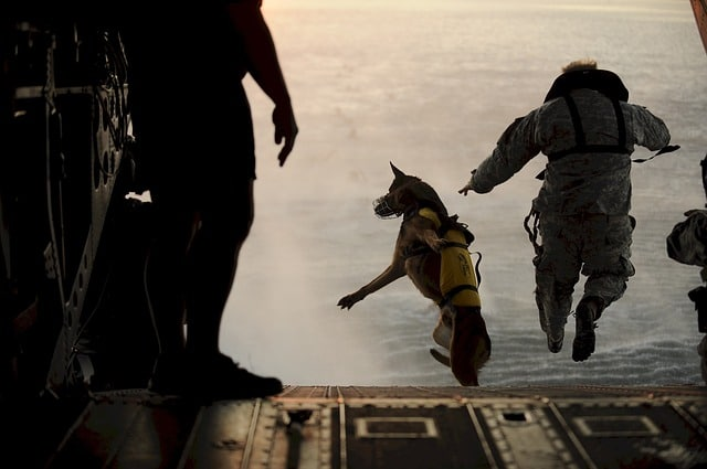 chien qui saute en parachute