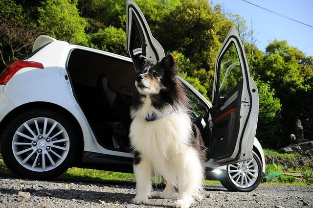 transport d'un chien dans une voiture