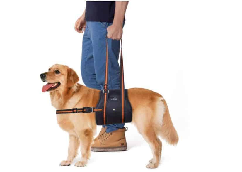 harnais de portage pour chien
