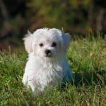 Comparatif des meilleurs tapis éducateurs pour chien