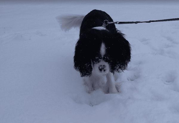 mookie dans la neige