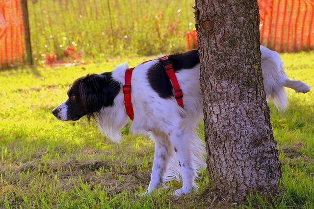 un chien qui fait pipi sur un arbre