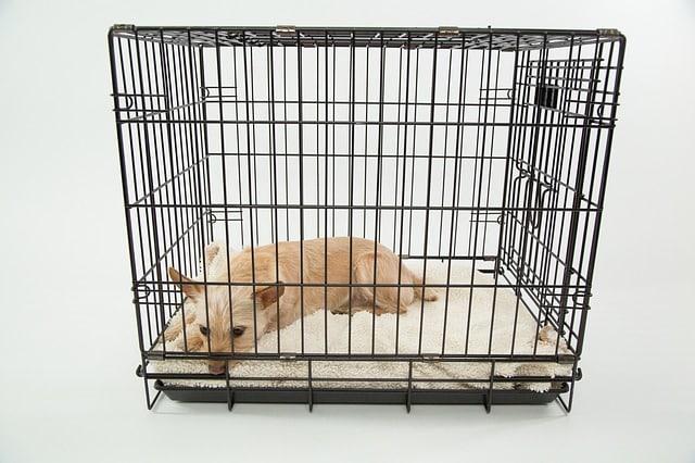 cage pour les chiens