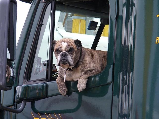 chien dans un camion