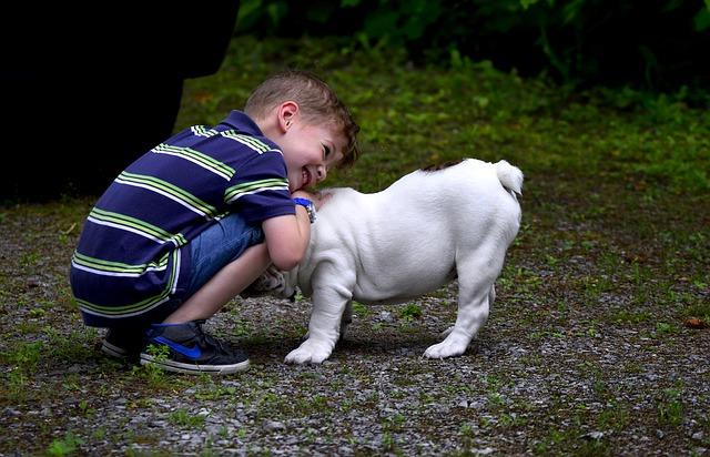 un jeune enfant jouant avec un chien
