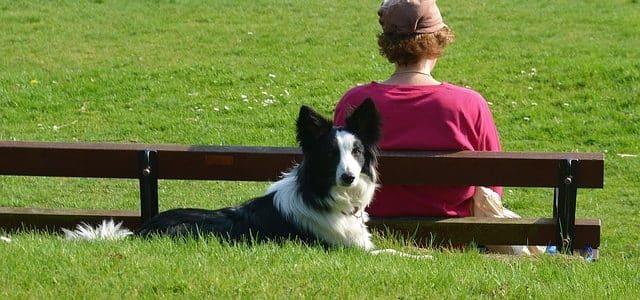 un jeune chien devant sa maîtresse