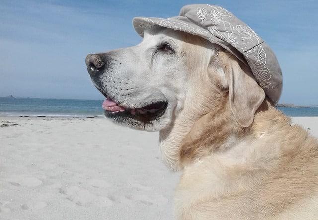 un chien sur la plage