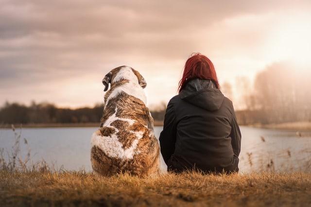 un chien accompagnant son maître
