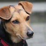 Comparatif des meilleurs colliers de dressage pour chien