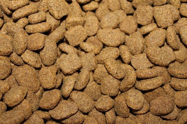 des croquettes pour chien