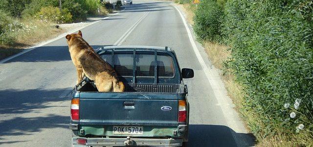 un grand chien qui déménage