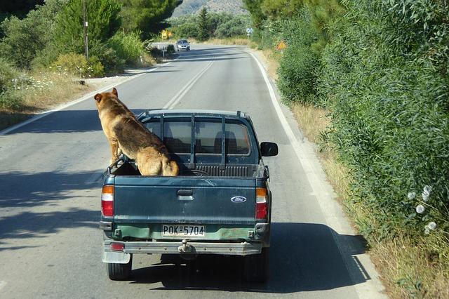 un grand chien dans une voiture