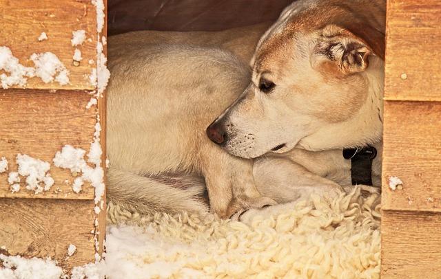 un chien dans sa niche