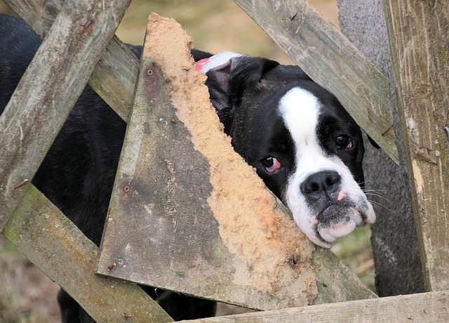 un chien derrière une barrière