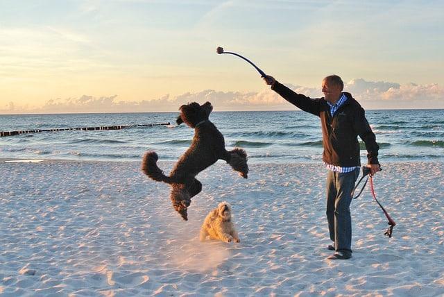 un chien qui joue sur la plage