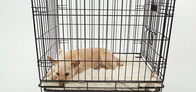 chien allongé dans sa cage