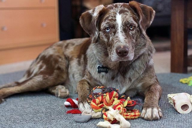 un chien stressé