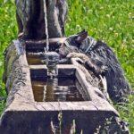 Comparatif des meilleures fontaines à eau pour chien