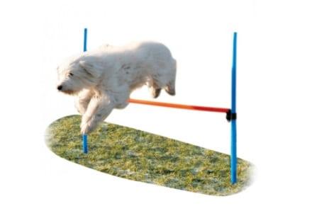 Haie Agility pour sport canin