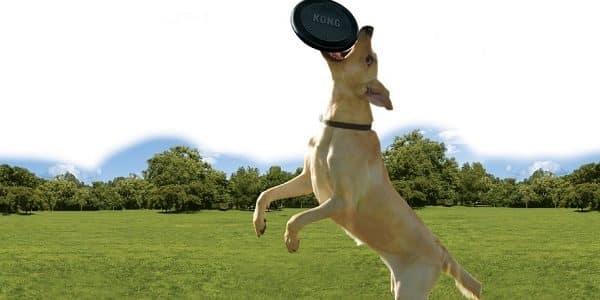 jouet kong pour chien