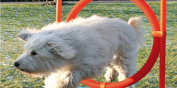 parcours d'agilité pour chien