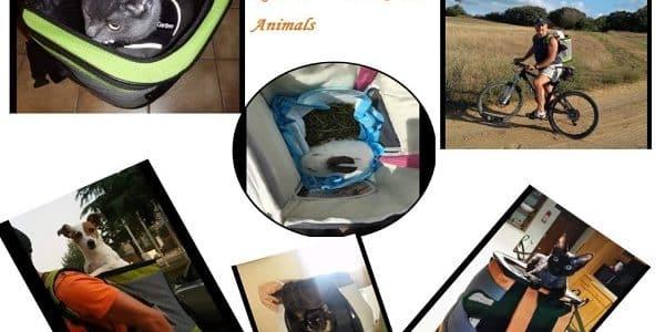 sac de transport moto pour chien