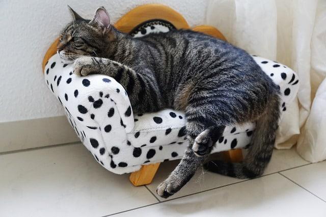un chat dans un canapé