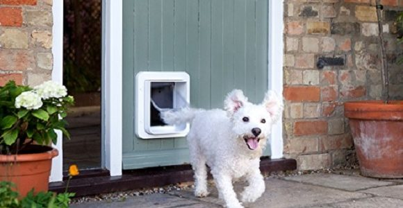 un chien sortant d'une chatiere lectronique
