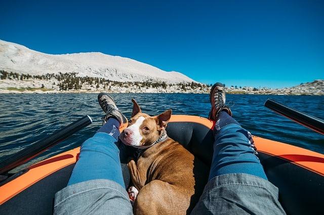 un chien en bateau